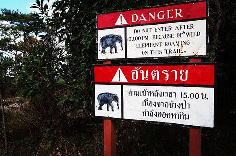 ภูกระดึง ภูกระดึง Forest Mountains Mountains Weterfall Phukradueng Thailand Thai Thailandtrip Thailandtravel Thailandtravels Loei เลย จังหวัดเลย อุทยานแห่งชาติภูกระดึง