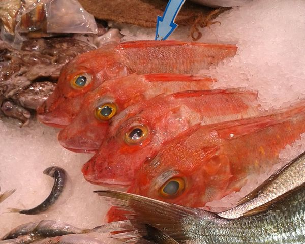 poisson trieste
