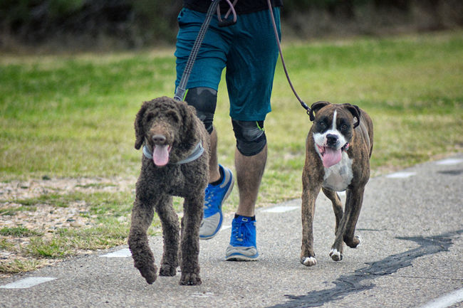 2 Dogs Dogs Body Part Canine Casual Clothing Day Dog Domestic Domestic Animals Human Body Part Jogging Leash Low Section Mammal Outdoors Pet Leash Pets Vertebrate Summer Exploratorium