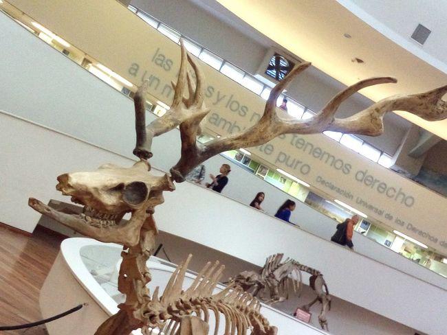 Museo de Ciencias Naturales Cordoba. Nature Museum Natulareza Museo
