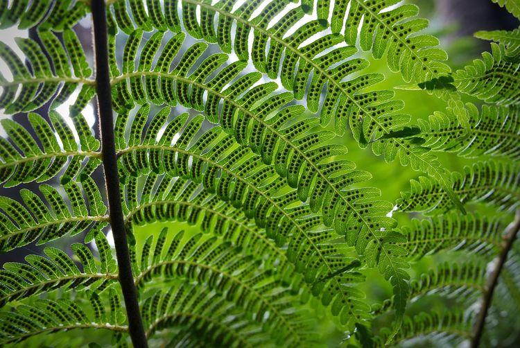 Leica X1 Leicacamera Macro Photography Nature Close Nature Close Up Nature Patterns Patterns & Textures Patterns In Nature Royal Botanic Garden Royal Botanic Gardens Royal Botanic Gardens, Melbourne
