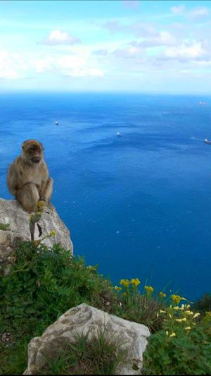 The Calmness Within Monkey Sea The Rock