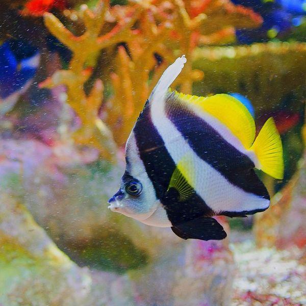 New England Aquarium AsDigiClicks EyeEm EyeEm Best Shots EyeEm Nature Lover