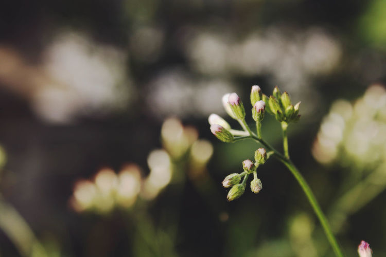 Back Lit Beauty In Nature Blossom Botany Branch Close-up Day Flower Flower Head Focus On Foreground Fragility Freshness Green Green Color Growing Growth In Bloom Leaf Nature New Life Outdoors Petal Plant Springtime Stem