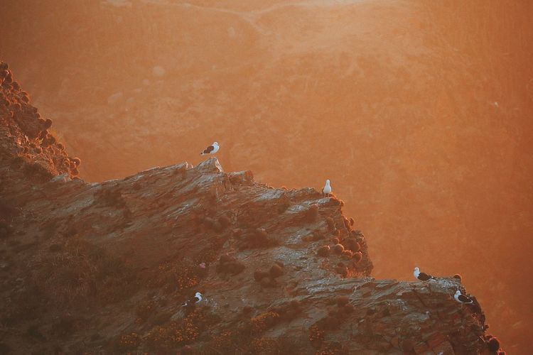 High Angle View Of Birds Perching On Cliff During Sunset