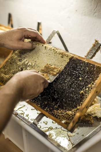 Honey Honeycomb Harvest Liquid Sweet Human Hand Hand One Person Human Body Part Food Food And Drink Holding Preparation  Real People APIculture Working Close-up Indoors  Occupation Selective Focus Invertebrate Bee Freshness Human Limb Preparing Food