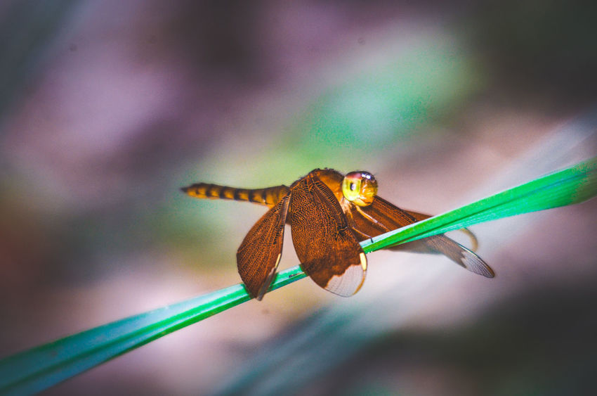 Animal Themes Animal Wing Animals In The Wild Beauty In Nature Butterfly Butterfly - Insect Close-up Day Focus On Foreground Growth Insect Nature No People One Animal Perching Plant Springtime Symbiotic Relationship Twig Wildlife Wing Zoology