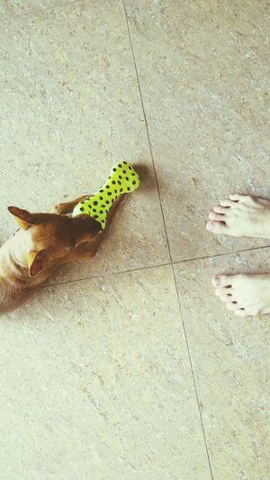 Play with me. Free Wi-Fi Dog Life Pet Dogslife Dog Lover Dog❤ Doglovers Dog Dogs Dog Love Doglover Pets Minature Pincher Minipinscher Mini Pincher