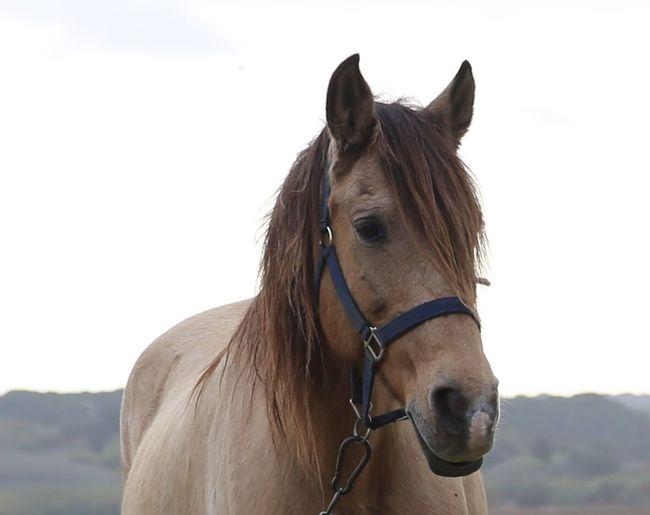 Horse head Portugal Alcacer Do Sal Horse Mammal Animal Domestic Domestic Animals Pets Animal Themes