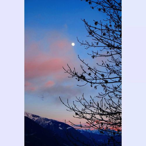 Moon Nature Flawers Winter Landscape