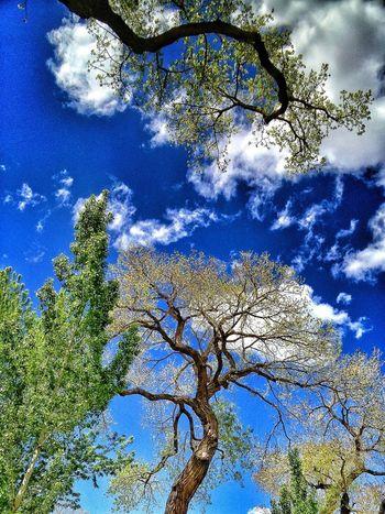 Clouds And Sky EyeEm Nature Lover EyeEm Best Shots - Trees