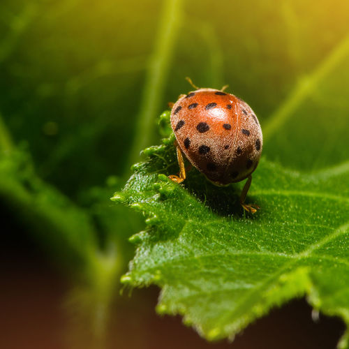 Animal Themes Animal Wildlife Animals In The Wild Beauty In Nature Close-up Day Fragility Green Color Insect Leaf Macro Nature No People One Animal Outdoors Plant Selective Focus Tiny