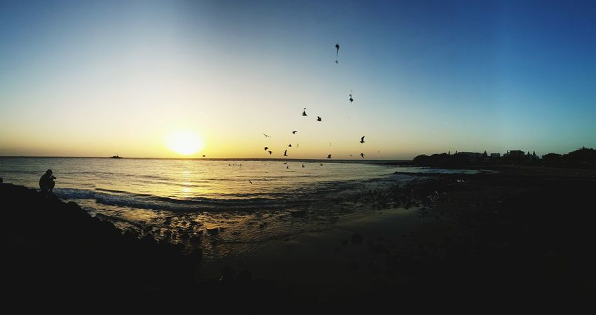 Flying Sea Large Group Of Animals Sunset Bird Animal Themes Animals In The Wild Flock Of Birds Animal Wildlife Scenics Sky Nature Outdoors Beach Horizon Over Water Travel Destinations Beauty In Nature Silhouette Water Vacations Anzacday2016 Sunrise Silhouette Sunrise Sunrise - Dawn