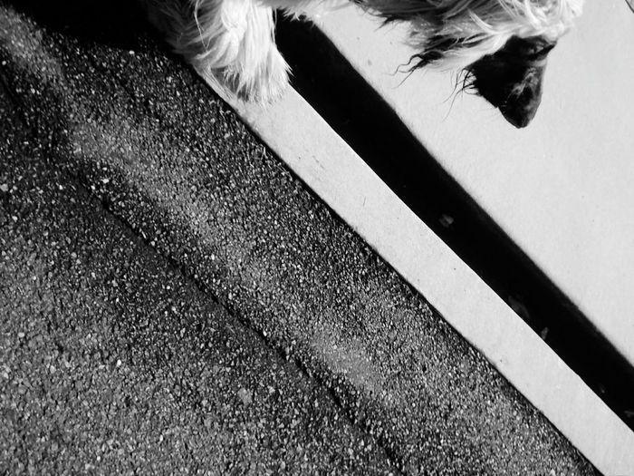 Streetphoto_bw Street Sreetphotography Dog Dog Walking Jogging Walking Around Sundaymorning Sunday Morning Streetdogsofpoland