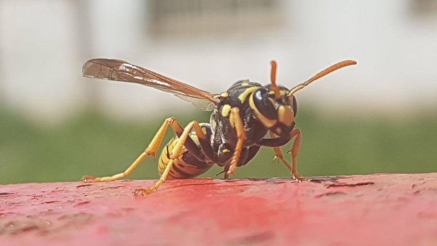 Bee Aragón