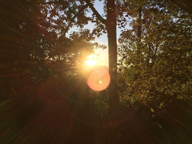 日初 Enjoying The Sun Soaking Up The Sun Hugging A Tree Relaxing