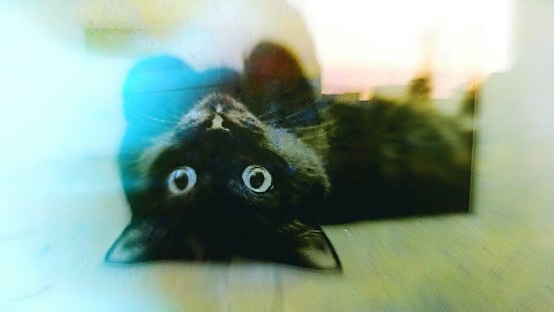 Black Kitten Magick Tenderness