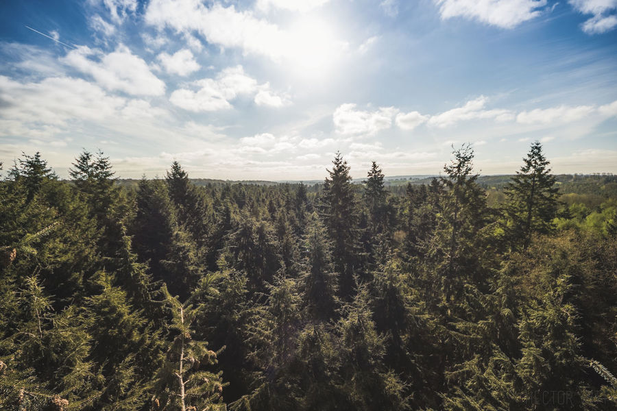 Arial Climbing Cloud Cloud - Sky Forest Height Photography Pine Pine Tree Tree Canopy  Tree Climbing Trees View View From Above Viewpoint