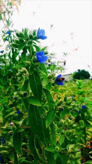 Flower Plant Nature Green Color Growth Outdoors Leaf Fragility Day Beauty In Nature No People Close-up Freshness Flower Head Animal Themes