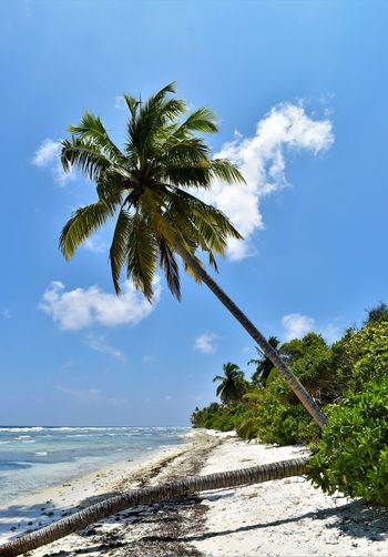 Beach Beauty In Nature Cloud - Sky Coconut Palm Tree Day Horizon Over Water Land Motion Nature No People Outdoors Palm Beach Palm Tree Plant Scenics - Nature Sea Sky Tranquil Scene Tranquility Tree Tropical Climate Tropical Tree Water Палм-Бич