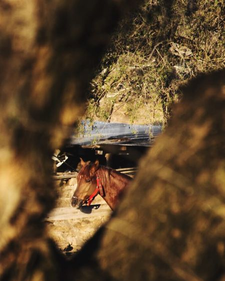 Day One Animal Sunlight Outdoors No People Tree Mammal Nature Domestic Animals Close-up Caballo Sierras
