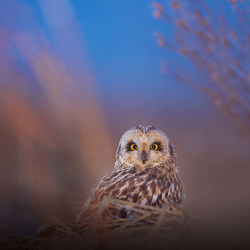 Portrait Of Owl Perching Outdoors
