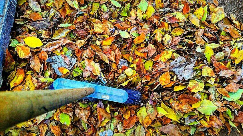 Lo lindo del otoño 🍂🍁🍂 . Mi mejor estacion!!!
