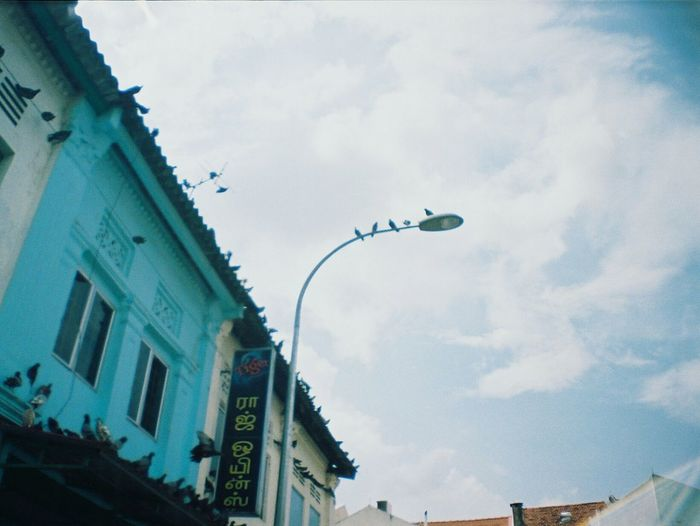 La Sardina 35mm Your Design Story Singapore Little India Film Photography Film Camera Analogue Vibes Analogue Love Analog Camera Analogue Photography Keep Film Alive Analog Filmisnotdead Street Photography The Street Photographer - 2016 EyeEm Awards Life Of Pigeons Pigeons Life Nature's Diversities