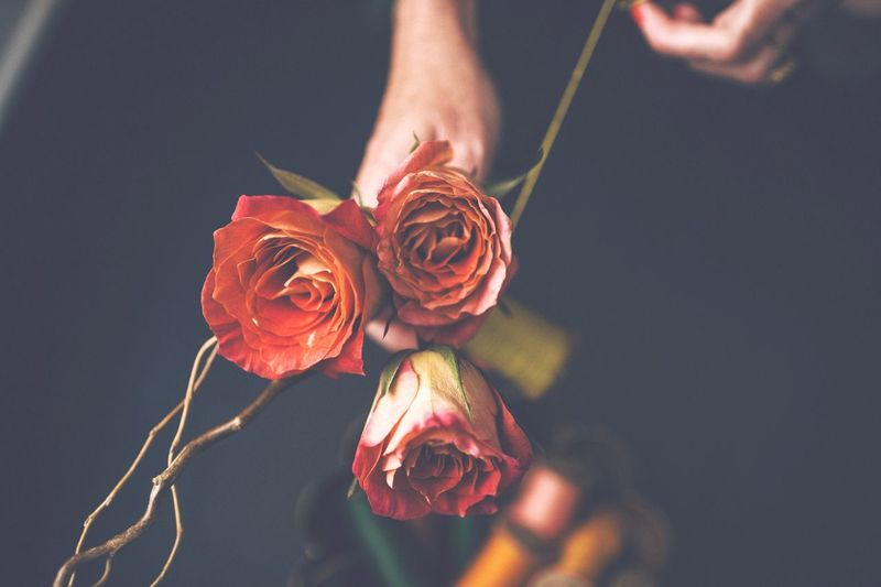 Rose EyeEm Selects Flower Flowering Plant Plant Beauty In Nature Close-up Freshness Rosé Rose - Flower Holding Human Hand First Eyeem Photo