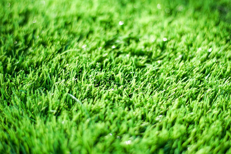 Close-up Day Full Frame Grass Green Green Color Nature No People Outdoors