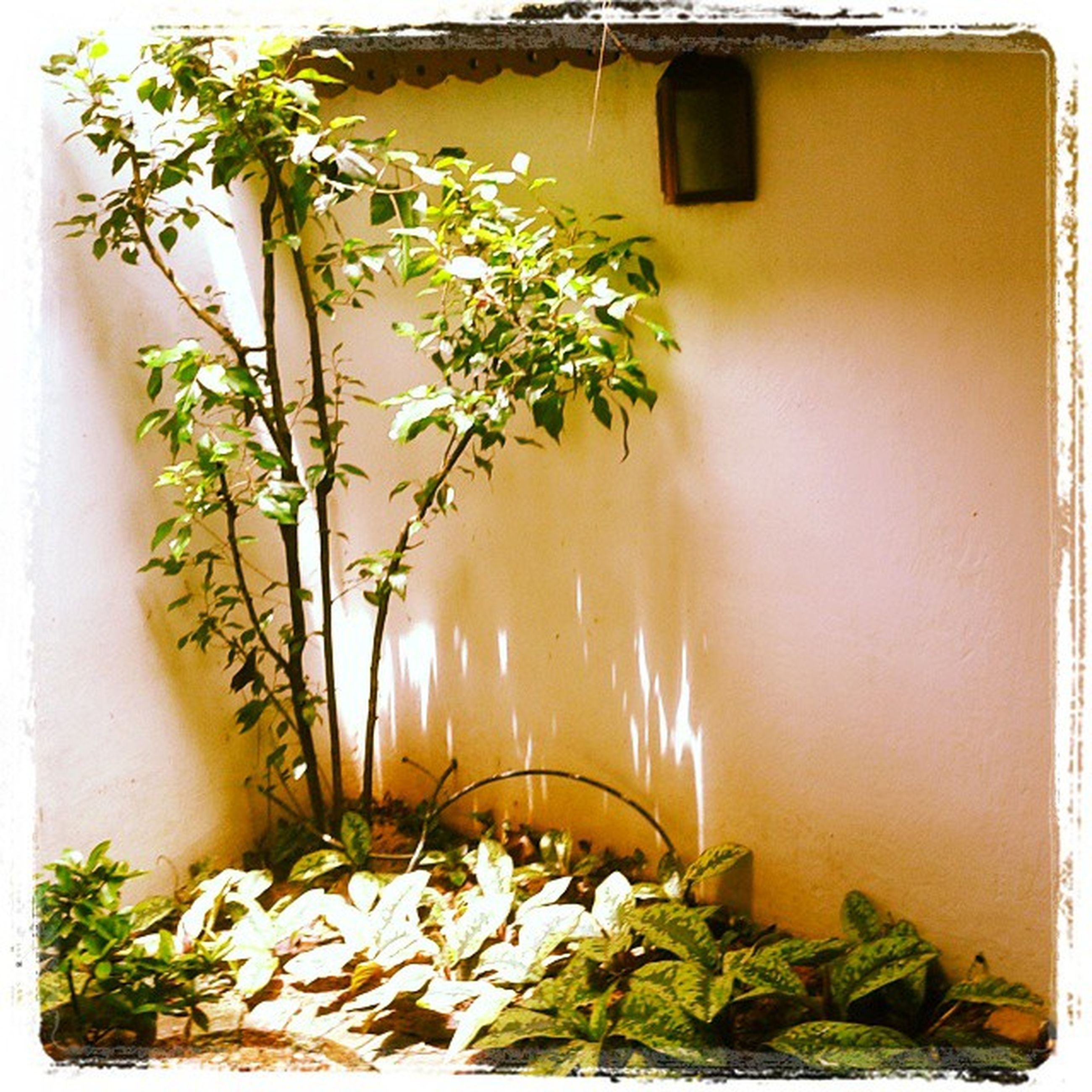 plant, growth, potted plant, leaf, built structure, flower, wall - building feature, architecture, house, nature, front or back yard, sunlight, wall, beauty in nature, orange color, building exterior, no people, yellow, green color, auto post production filter