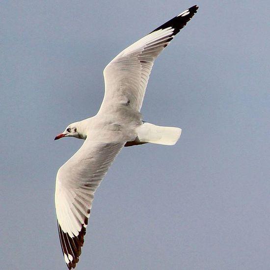 Birds Bird Birdwithattitude Flying Chase Canon1200d Canonindia Canon_photos Canonmumbai @andreapicoestrada @flyingbrid @bird