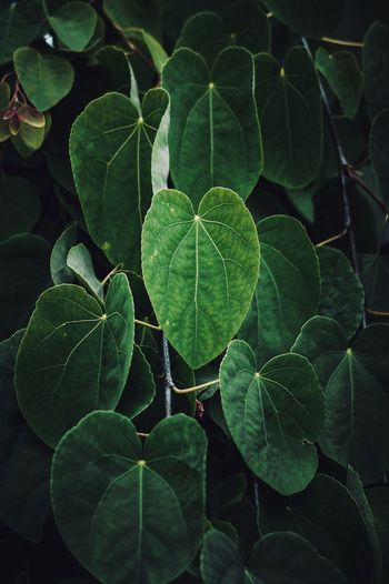 Green plant leaves textured in summer