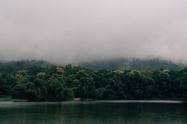 A mist Tree Plant Beauty In Nature Scenics - Nature Fog Water No People Nature Sky Tranquil Scene Lake Forest Outdoors Tranquility