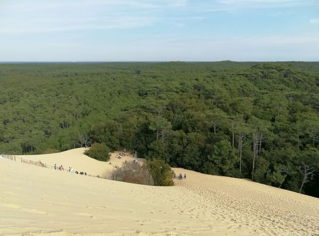 Landscape Nature Outdoors Beauty In Nature Holiday And Relaxing Goodvibes Dune Du Pyla Pineforest ☺️😊😍 Travel Destinations Beauty In Nature Desert Tranquility