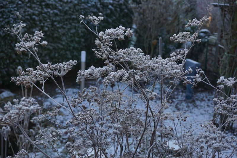 Snow Cold Temperature Winter Frozen Plant Nature Beauty In Nature