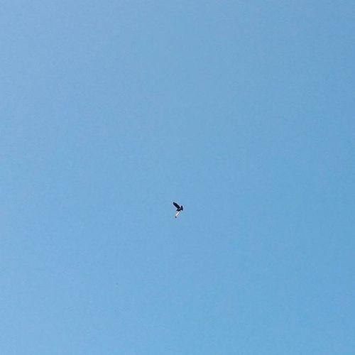 || F R E E D O M || . . Bird FlyHigh Clearbluesky Freedom MajesticBlueSky Bluesky Lonelybird Lonelyplanetindia Wanderlust SubjectinMySquare 1x1