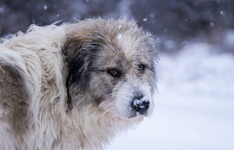 Close-up of dog in snow