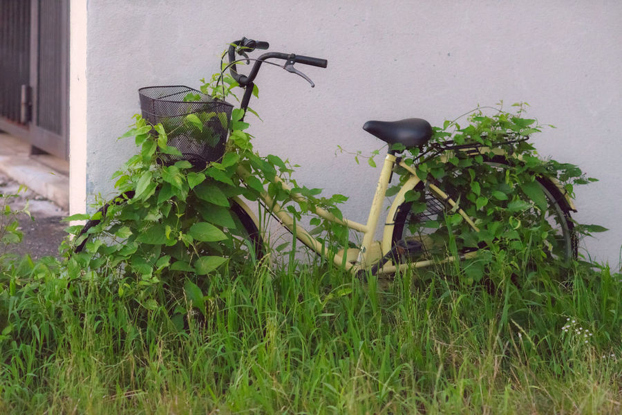 A bike eaten by nature in Yamagata, Japan. Grass Green Color Japan Life Wall YAMAGATA Bicycle Bike Day Eatenbynature Grass Green Color Growth Land Vehicle Leaf Mode Of Transportation Nature No People Outdoors Plant Plant Part Transportation