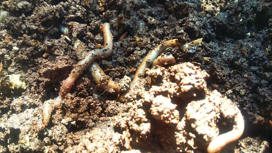 Soil Worms Compost Nature Sowing Nutritional Soil Taking Photos