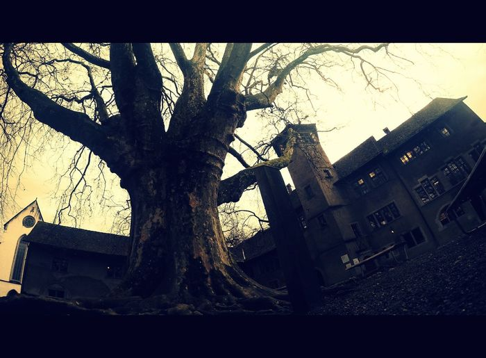 TreePorn Dark Edit Creepy Objects Scary Stuff  Architecture Outdoors No People Day