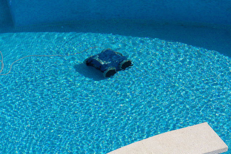 High angle view of turtle in swimming pool