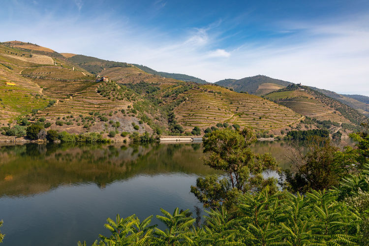 Douro river with vineyards in surrounding valley Douro  Hills Portugal Beauty In Nature Day Environment Green Color Idyllic Land Landscape Mountain Mountain Range Nature No People Non-urban Scene Outdoors Plant Riverbank Scenics - Nature Sky Tranquil Scene Tranquility Tree Vineyard Water
