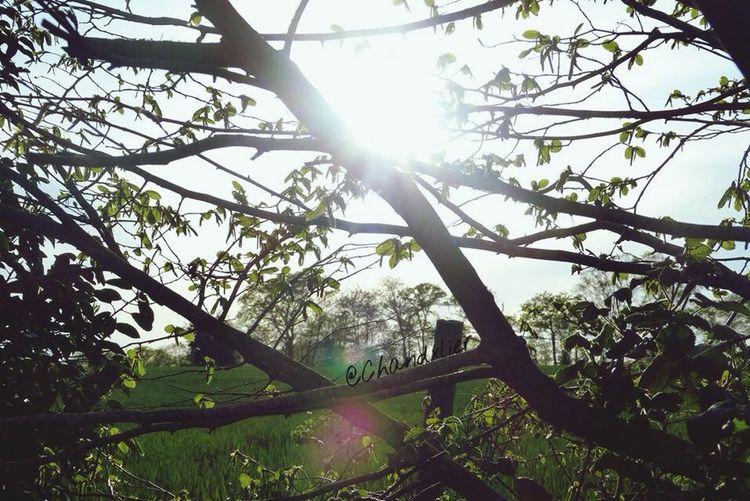 Sun First Eyeem Photo