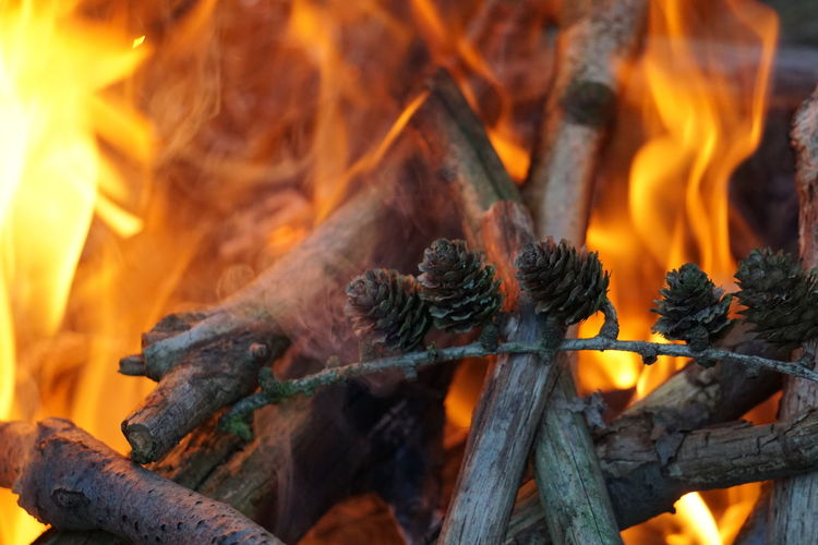 Close-up of pine cones on stick burning in campfire