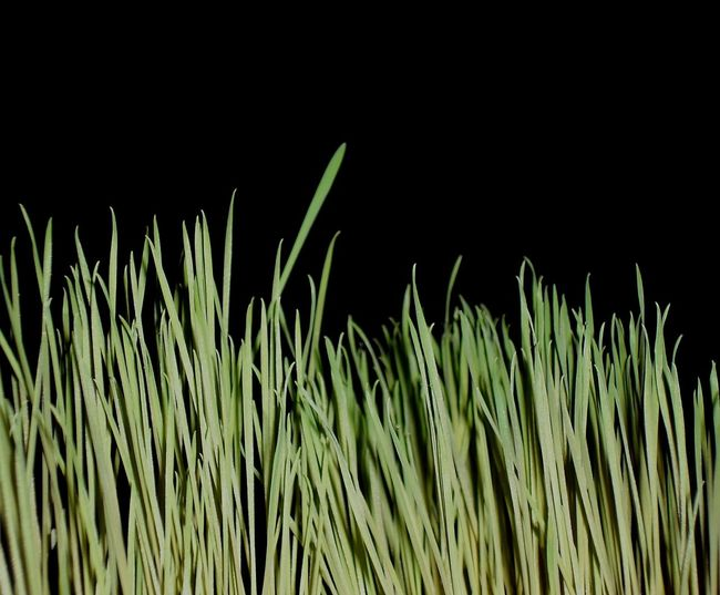 Grass against black background