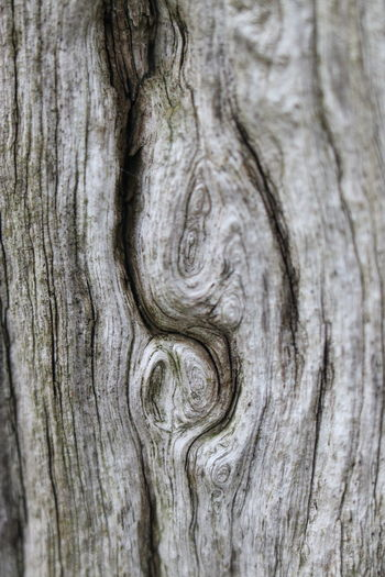 wood Eeyem Photography Beauty In Nature Eeyemgallery Best Shots EyeEm Eeyem Nature Lover Macro Photography Special View View Other Point Of View No People No Filter, No Edit, Just Photography Defocused Old Tree Tree Trunk Backgrounds Wood Grain Textured  Knotted Wood Close-up