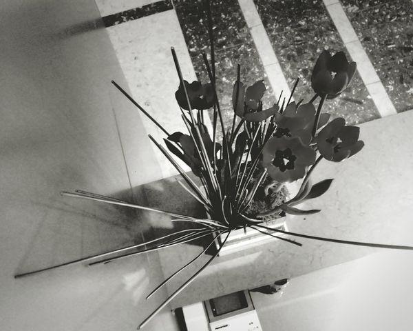 Black And White Photography Tulips Flowers Pretoebranco Tulipas Lindas