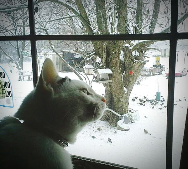 """""""Tippie"""" watching all of the birds eating their food outside of the window! ☺ Bird Watch Catching A Sho Catlove"""