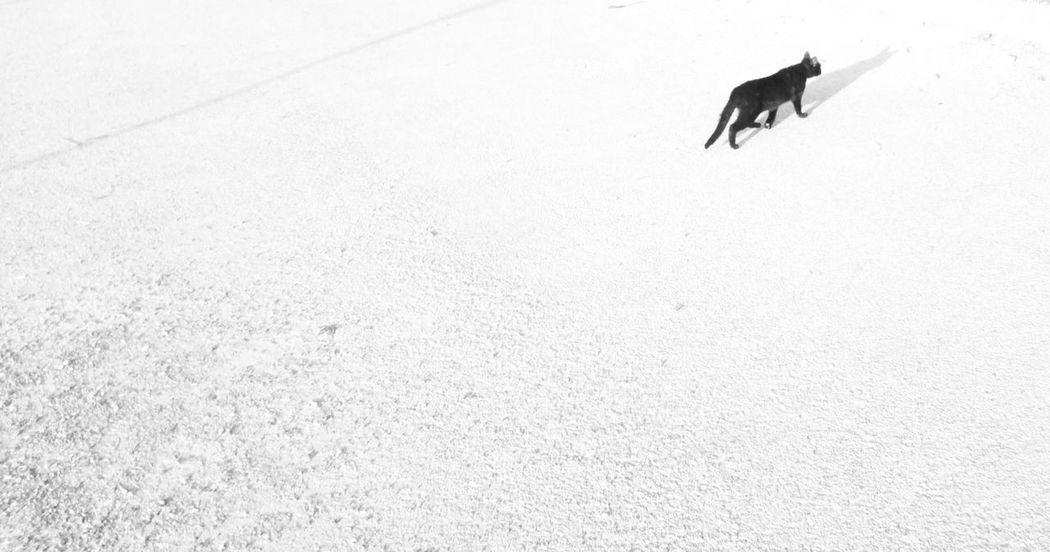 Why did the BLackCat cross the road❔ because Khalid was passing by 👻👁️🤘 Glitch In The System Glitch In The Matrix Rewind Blackandwhite Monochrome Open Space Copy Space Beware Superstition  Metaphysical Picture Metaphysics MnMl Mnmlsm Minimalism Minimal Minimalistic Minimalmood Minimalist Minimalobsession Mobilephotography Shootermag Casual AMPt_community Snapseed